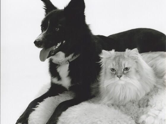 Meine zwei Models :-)