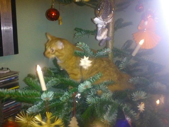 Frech wie Oscar - Oscar im Weihnachtsbaum