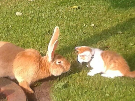 Kaninchen in der Nahrungskette? ;)