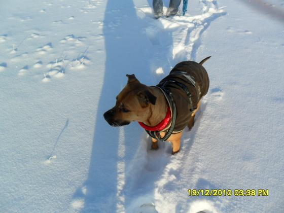 Winter in Meck-Pomm 2010