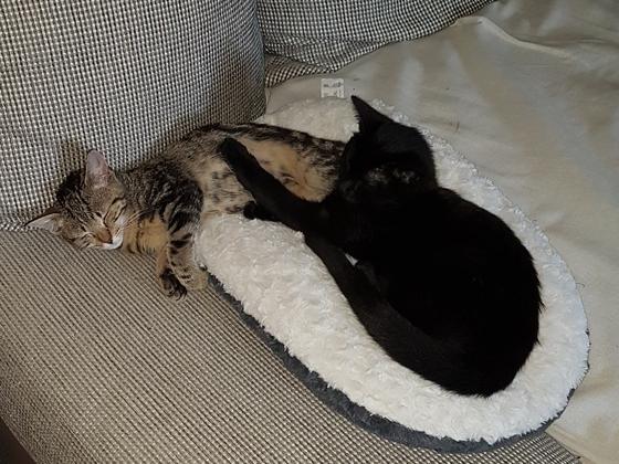 Meine zwei Luzi (schwarz) und Gismo