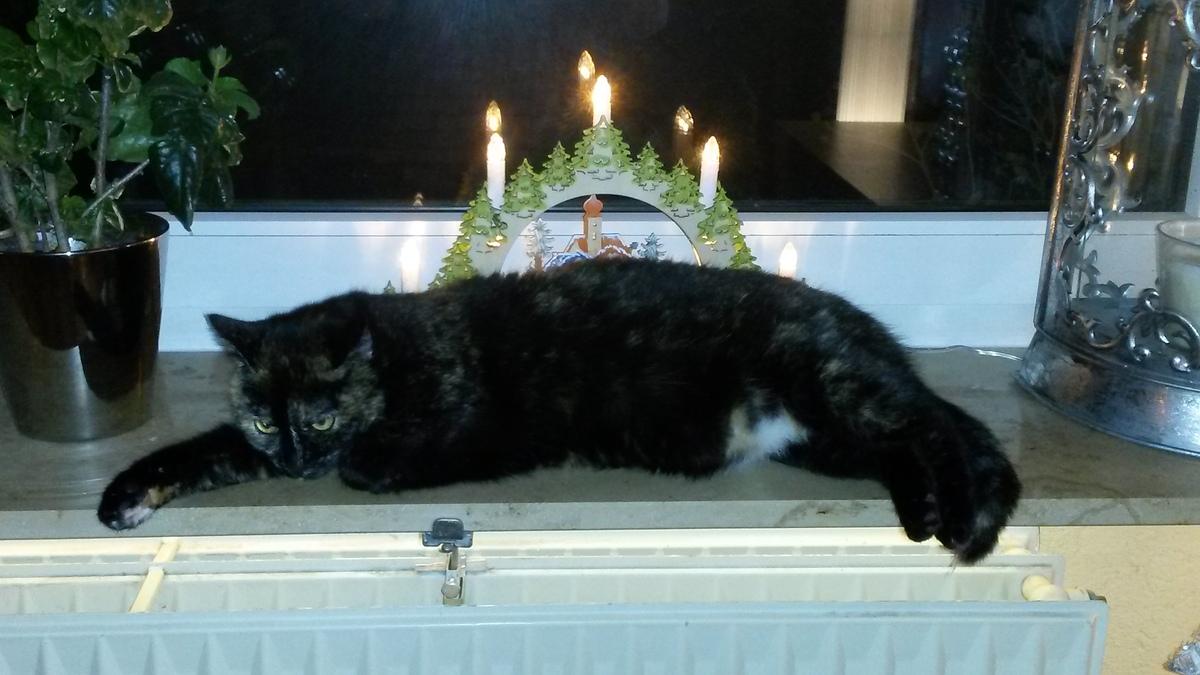 Madame Lucy ganz besinnlich....und vollgefuttert :-)