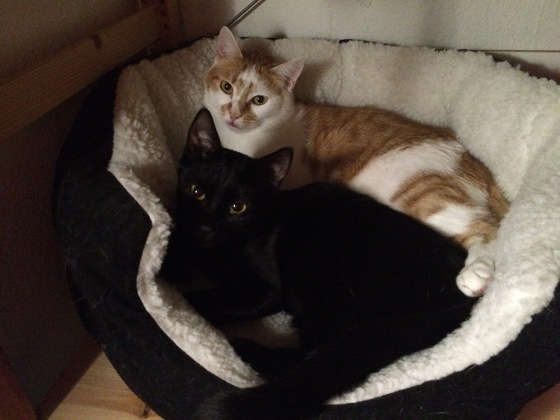 Mimi und Aywa ( schwarze - Mimi - 7 Monaten, rot-weiss - Aywa - 19 Monaten )