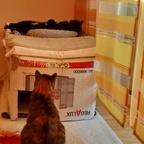 Wer hat in meinem Bettchen gelegen? ...ähm...liegt da noch drin!?