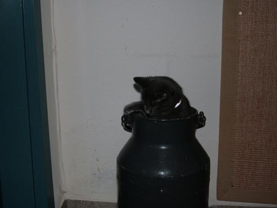 Meine Kleine in der großen Milchkanne