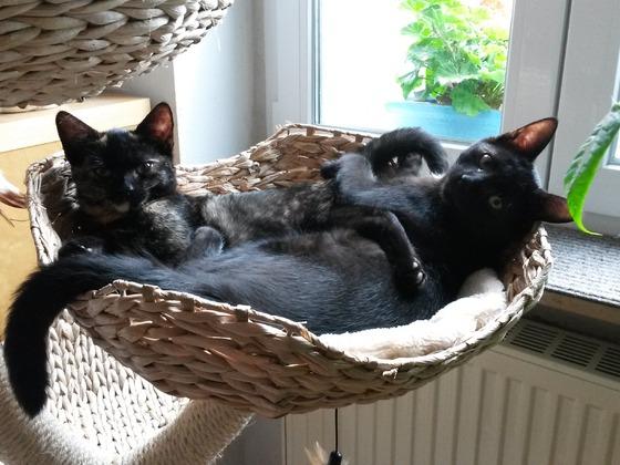 Henry und Lissi