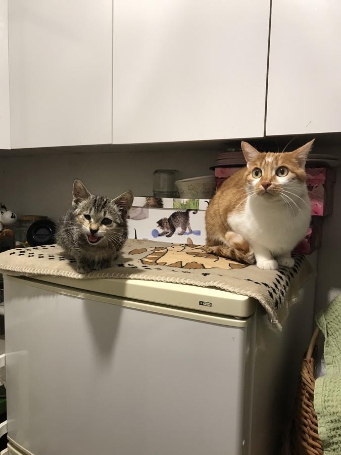 Mimi und Lilo