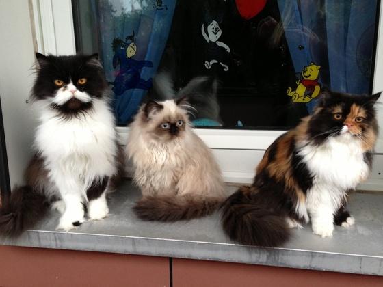 Tom, Mia und Sina
