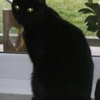 Aris auf seinem Lieblingsplatz an der Fensterbank