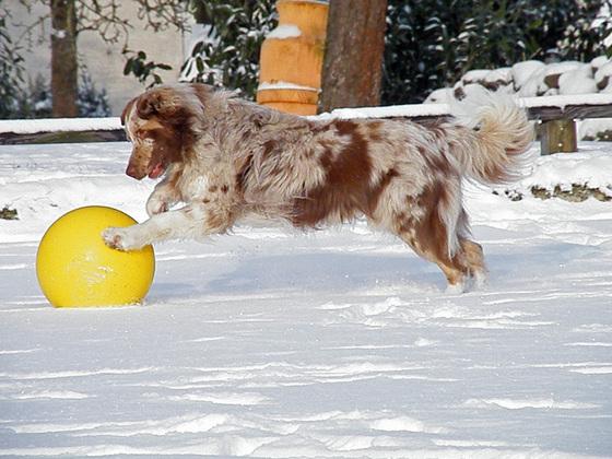 Toto mit seinem neuen Ball