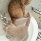 Brrr erstmal Katzenwäsche :)