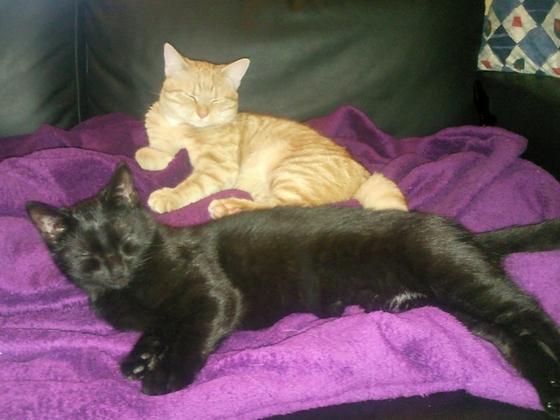 03.11.12 Jiny und Krümel auf dem Sofa