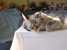 SiRu's Couchpotatoes : Flocki in Denkerpose (Mal wieder den Kopf in die Pfote stützt...)
