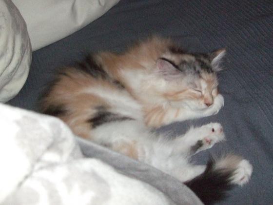 schlafen ist doch was schönes...