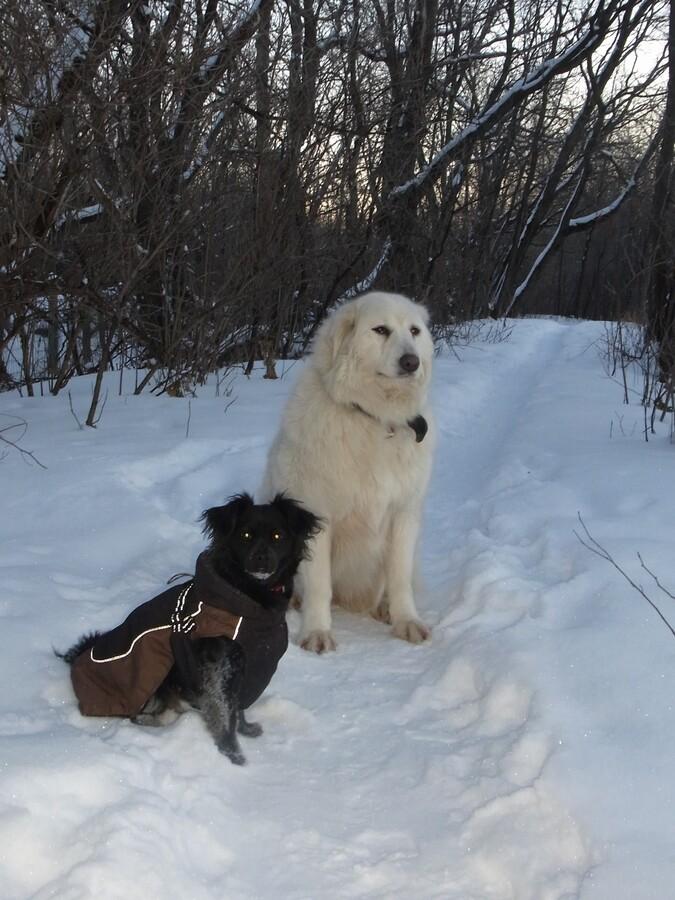 Winterspaziergang mit Simka&Lumi