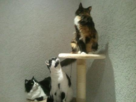 Gismo, Kimba & Zoey