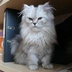 Milow im Bücherregal