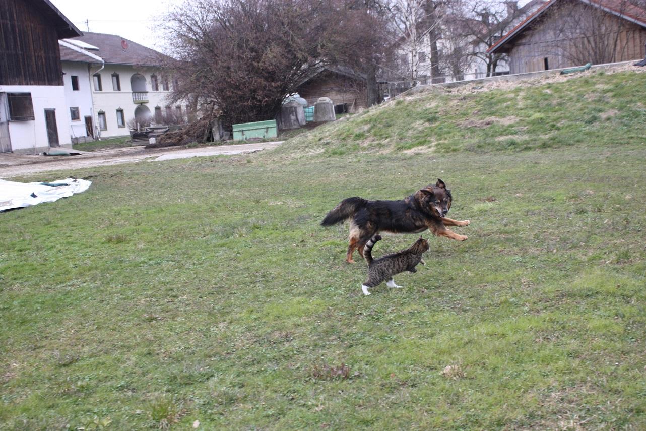Audrey und Lucy beim Spazierengehen