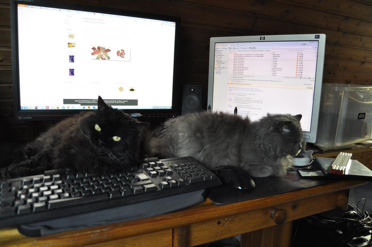 Ich brauche einen größeren Schreibtisch